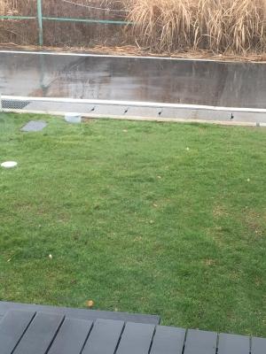 冬芝が綺麗に敷けたところ